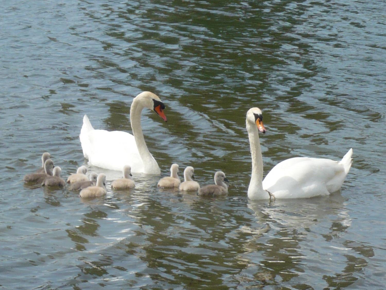 5 - Nous voilà au complet sous l'oeil vigilant  de papa à gauche et maman à droite.